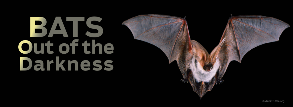 BATS web banner 2 1 1024x375 BATS: Out of the Darkness