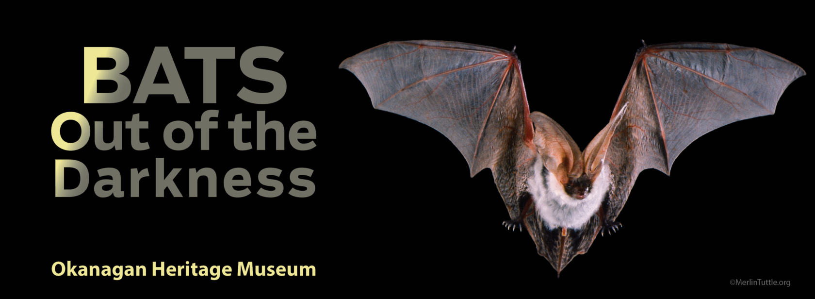 BATS web banner dates removed Home