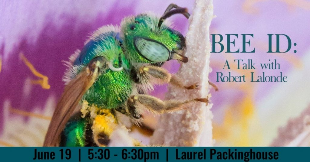 BeeID1200x628 1024x536 Bee ID: A Talk with Robert Lalonde