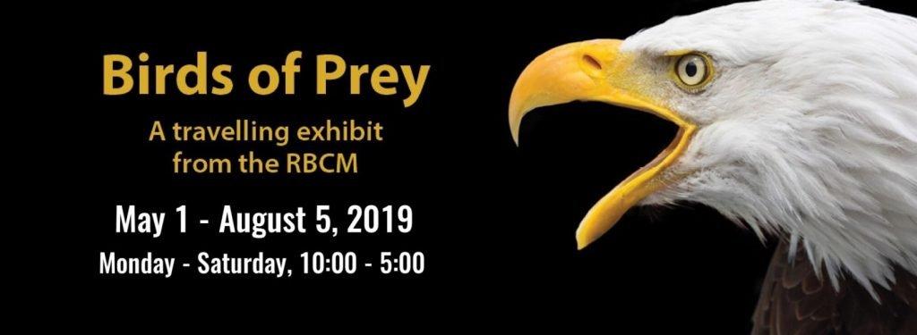 Birds of Prey 1024x375 Birds of Prey