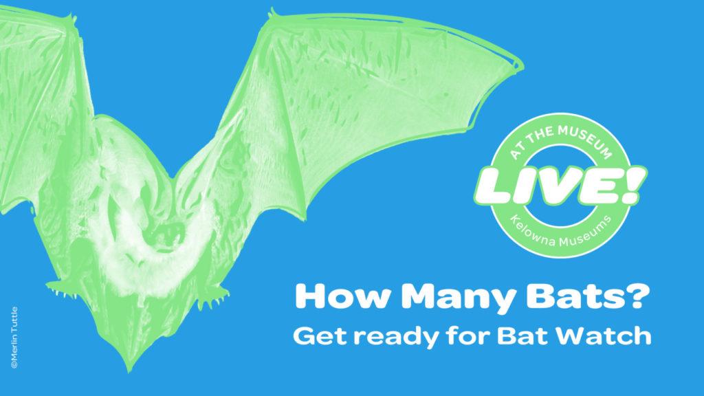 How Many Bats Event Image 1024x576 How Many Bats?