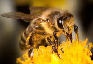 Kelowna Museums help the bees 300x207 Ride to the Museum on Earth Day