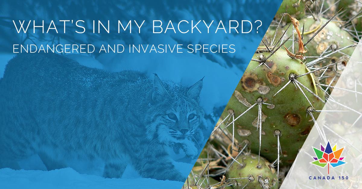What's in my Backyard? - Kelowna Events - Kelowna Museums