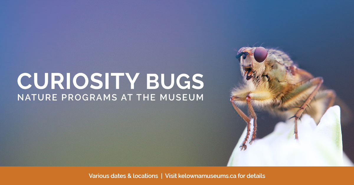 KelownaMuseums 2018 Programs CuriosityBugs 1200x628 v2 1 Curiosity Bugs Presents: Animals in my Backyard