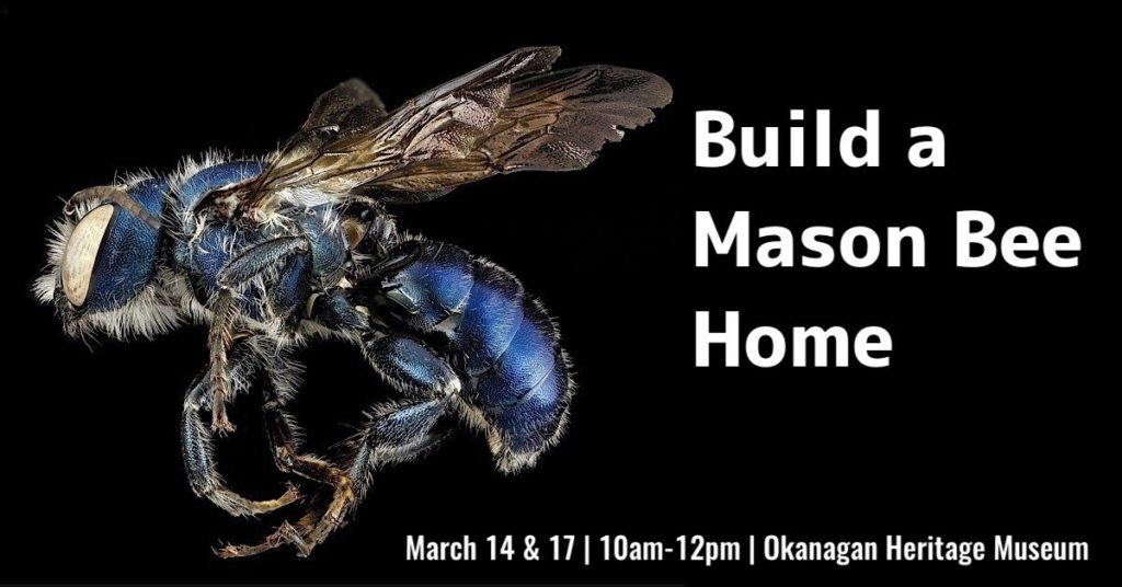 Mason Bee Home 1200x628 1 1024x536 Build a Mason Bee Home