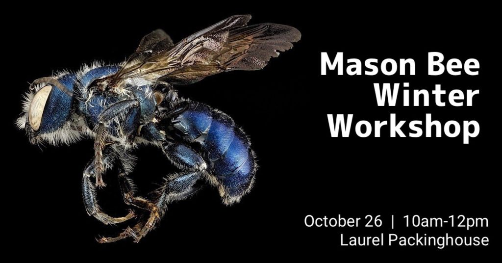 Mason Bee Winter Workshop 1024x536 Mason Bee Winter Workshop