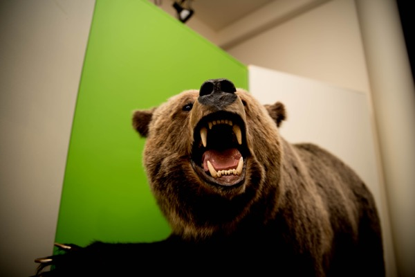 Okanagan Heritage Museum Bear Explore the Changes