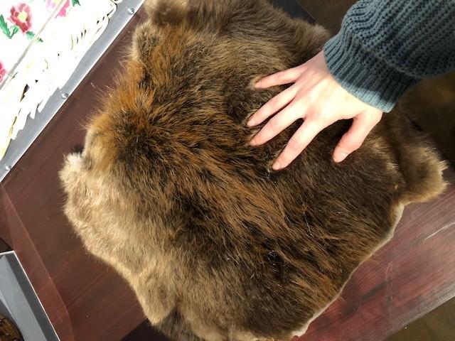 fur Explore the Changes