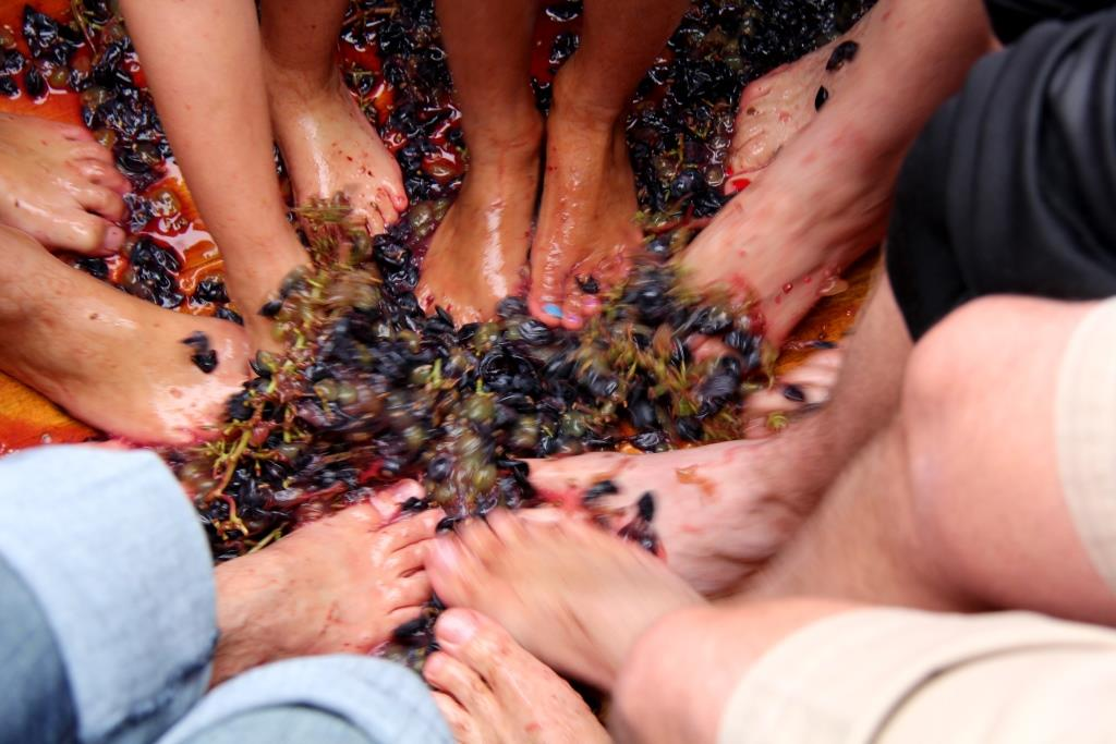 grape stomp Sesqui licious Nosh