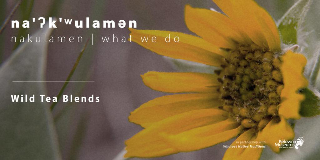 nakulamen wild tea blends evenbrite 1024x512 na'ʔk'ʷulamən (what we do): Wild Tea Blends