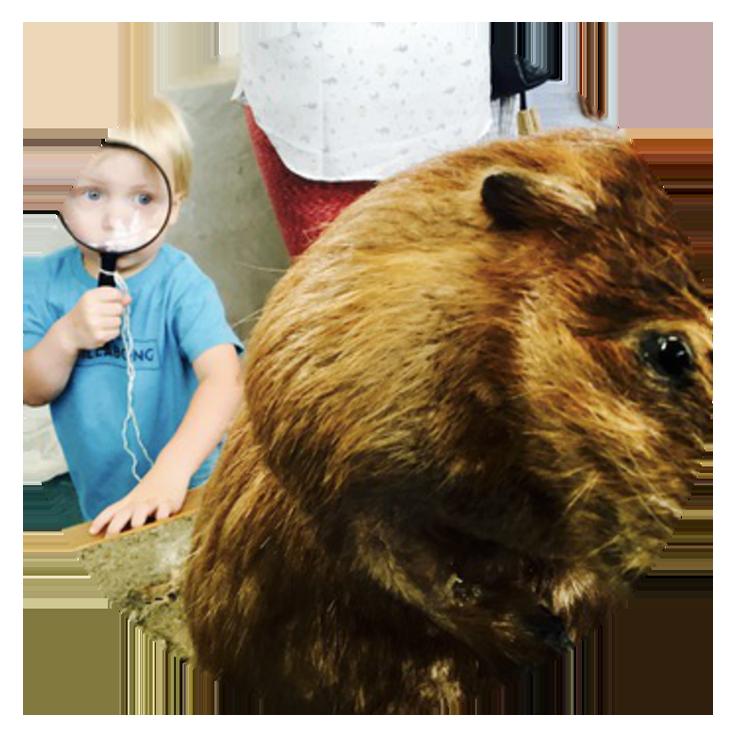 smaller beaver kid Birthday Parties